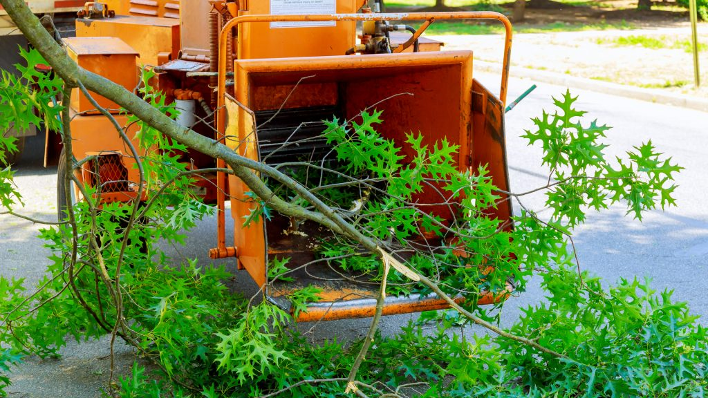 A fallen tree being ground up and disposed of by a commercial tree removal service.